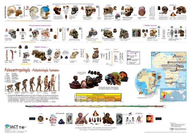 Póster Paleoantropología: paleobiología humana