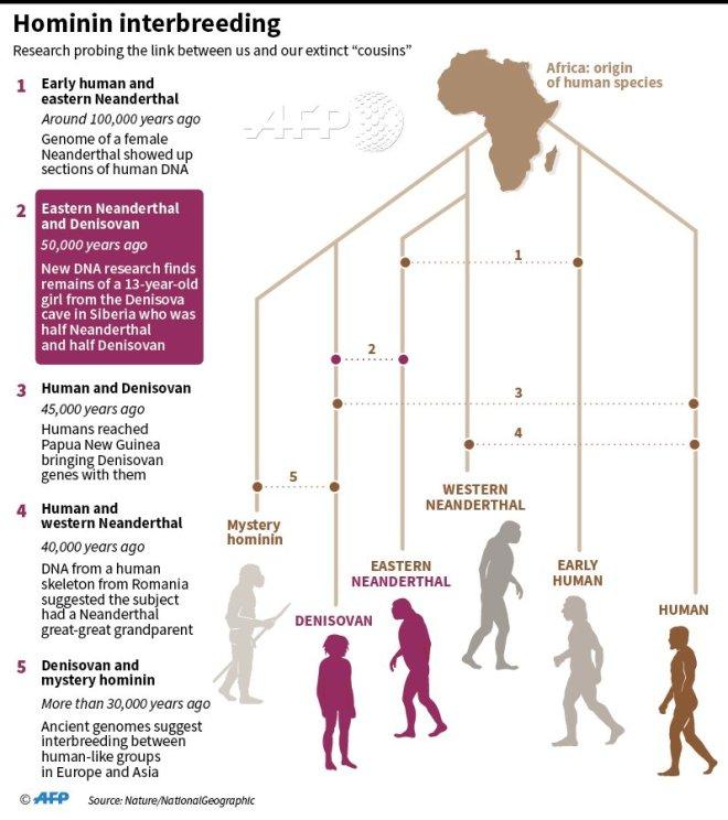 Hominin interbreeding