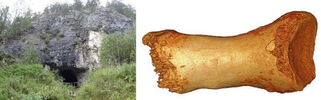 Denisova neandertal