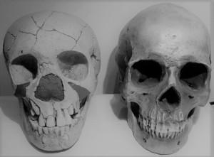 Cráneos Teshik-Tash neandertal infantil y humano moderno adulto