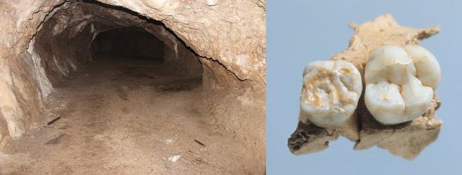 Pontnewydd neandertal