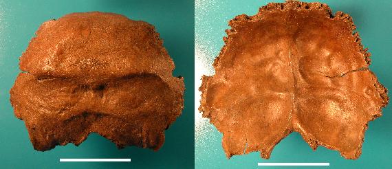 Salzgitter neandertal