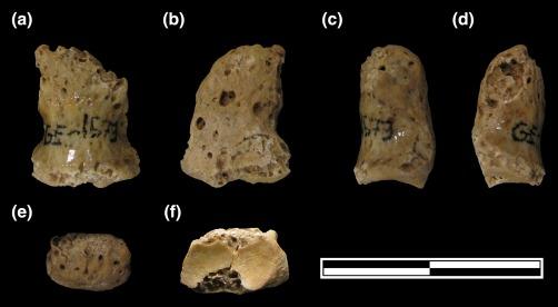 Falange pie Atapuerca