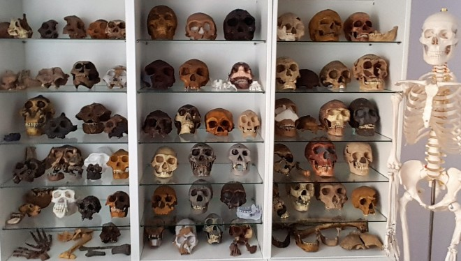 paleoantropología Roberto Sáez