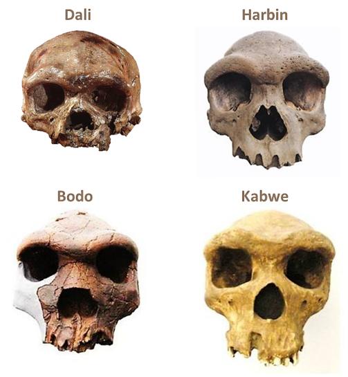 Dali, Harbin, Bodo, Kabwe