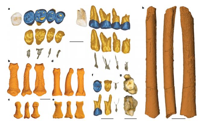 Homo luzonensis fossils