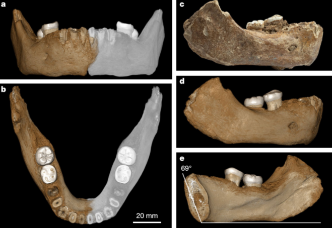 Xiahe Denisovan mandible