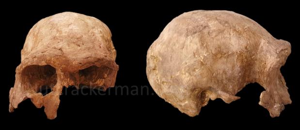 Buscadores de fósiles, ER 3883 y la variabilidad en Homoergaster