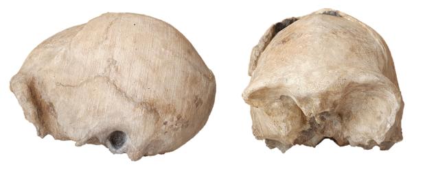 Los Homo erectus con el cráneo más pequeño y el Homo habilis másreciente