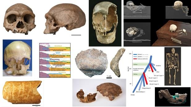 Paleoantropología: novedades 2º trimestre2021