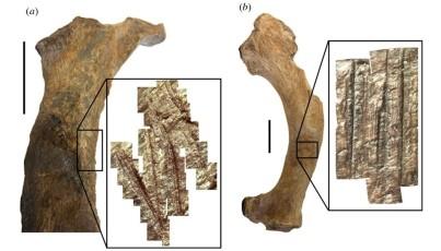 Marcas de corte en huesos de fauna del Arroyo del Vizcaíno (Uruguay)