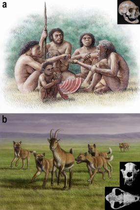 Dos especies sociales en Dmanisi: erectus y licaones