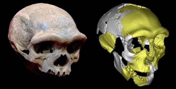 Un nuevo grupo hermano del linaje sapiens: sobre los cráneos de Hualongdong yHarbin