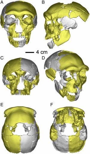 Cráneo de Hualongdong