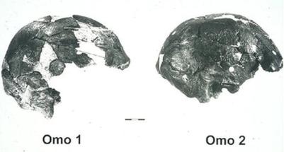 Los dos cráneos de Omo