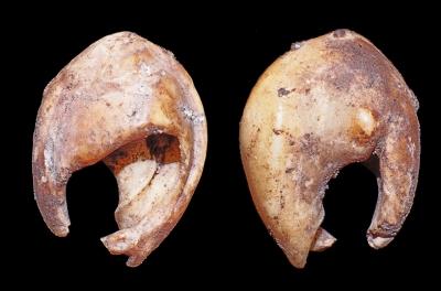 Conchas perforadas de Bizmoune